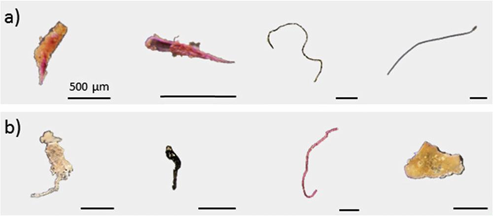 Примеры частиц, обнаруженных: а) в рыбе (волокна синтетической ткани, полиэтилен, этиленпропилен, полиакриламид) и b) в подвидах (полиэтилен, полиарамид, полипропилен, полиакриламид)